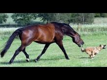 Animals Can Be Jerks Compilation 2014 NEW HD